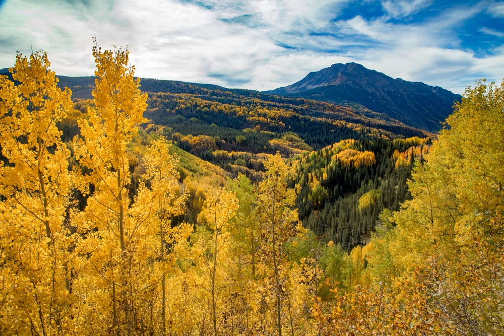 One of the best things to do in New Mexico this fall is to enjoy the beautiful fall folaige
